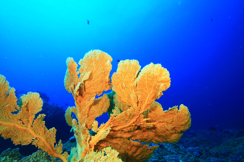 dive-adventure-round-island-remora-088-copy