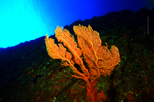 dive-adventure-round-island-remora-309-copy