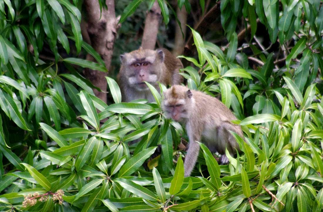 monkey-010-copy