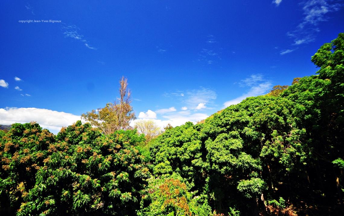 d300 Mauritius 2 117