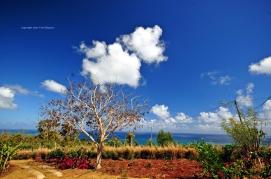 d300 Mauritius 2 187