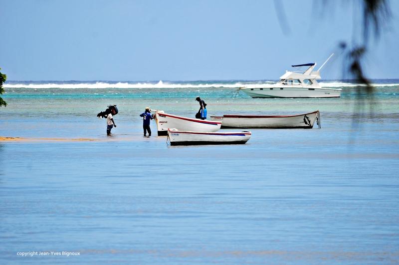 Nikon d300 Mauritius 186