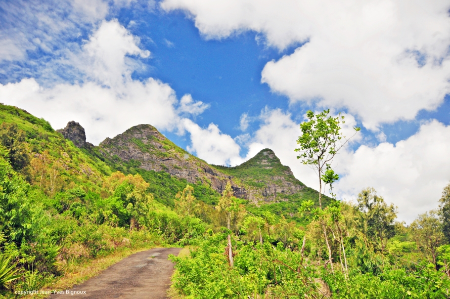 Nikon d300 Mauritius 207