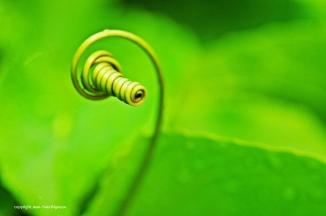 Nikon d300 Mauritius 262