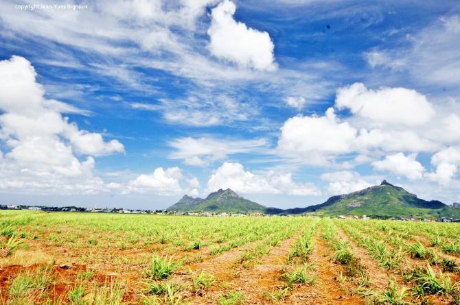 Nikon d300 Mauritius 600