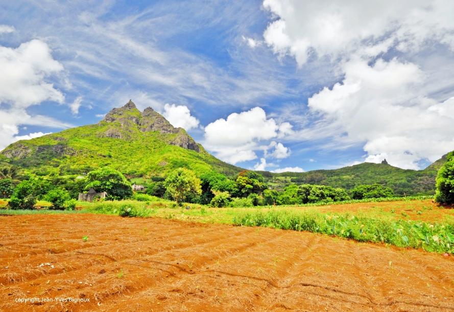 Nikon d300 Mauritius 617