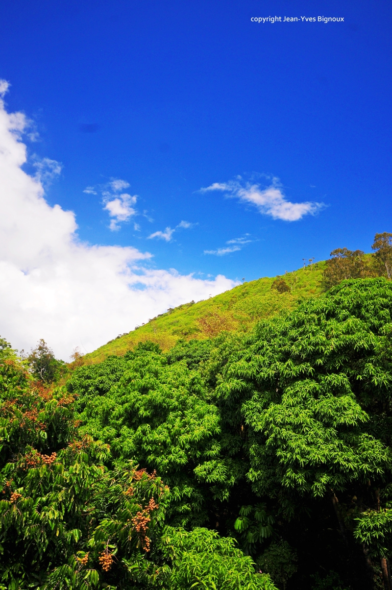 Nikon d300 Mauritius 629