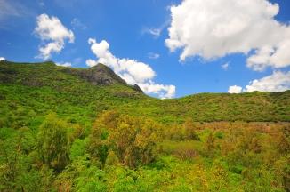 Nikon d300 Mauritius 643