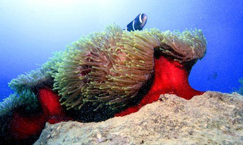 The many fundamental facets the oceanic world via Oceanography,Marine Biology ,Underwater Photography and the art and science of Scubadiving.