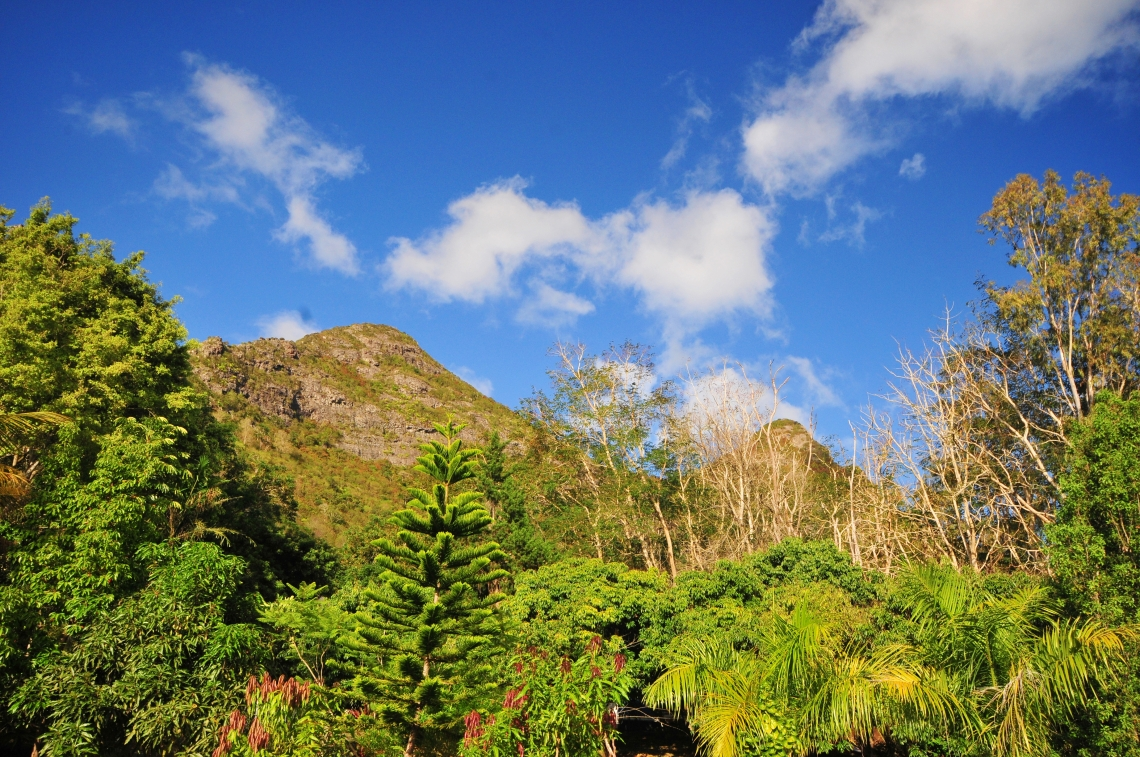 d300 Mauritius 2 135