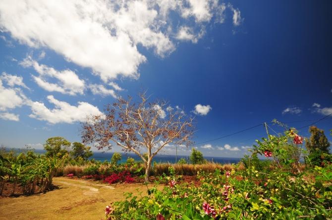 d300 Mauritius 2 197
