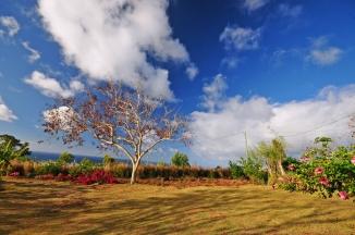 d300 Mauritius 2 224