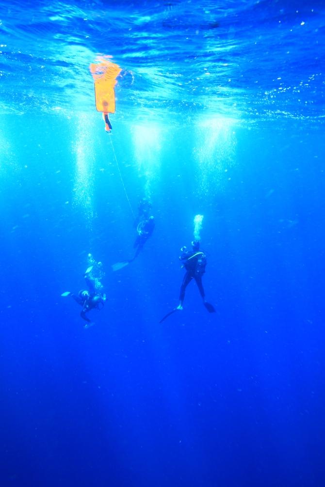 dive adventure round island remora 376