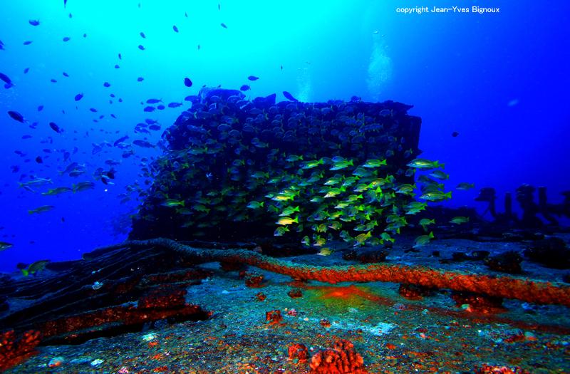 maxy dive and shipwreck 051 copy