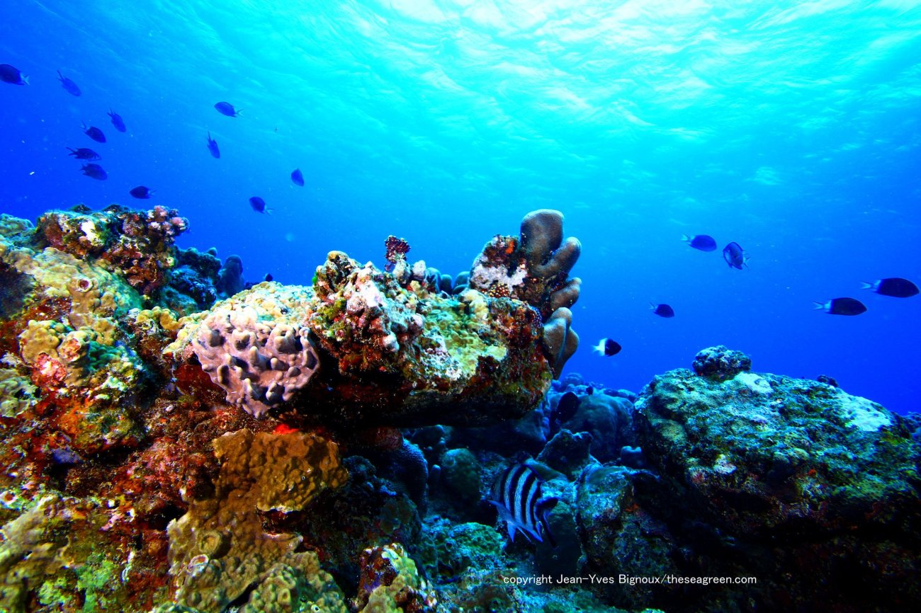 View in Big Photo - http apps facebook com bigphot