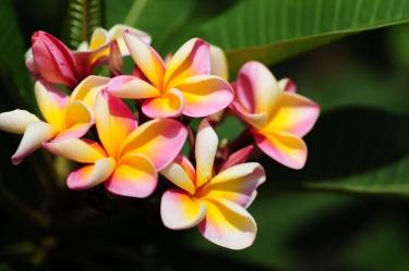 d300 Mauritius 2 312