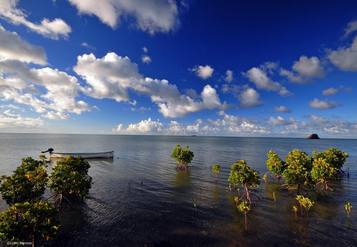 d300 Mauritius 2 581